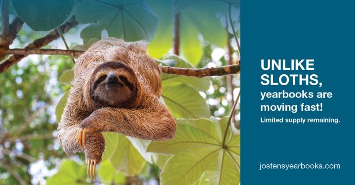 FB_sloth2